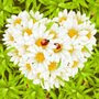 and I love daisies!