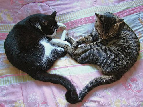 pics of puppies and kittens together. kittens playing together,