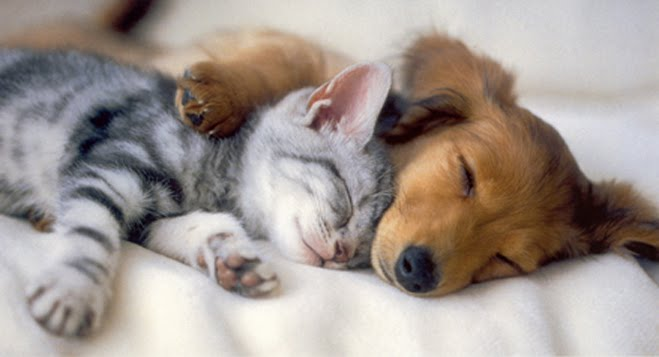 cute puppies and kittens wallpaper. cute puppies and kittens