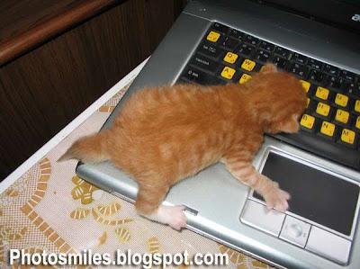 котята, кошки, прикольные фото, смешные кошки, фотография