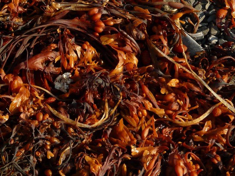[seaweed]