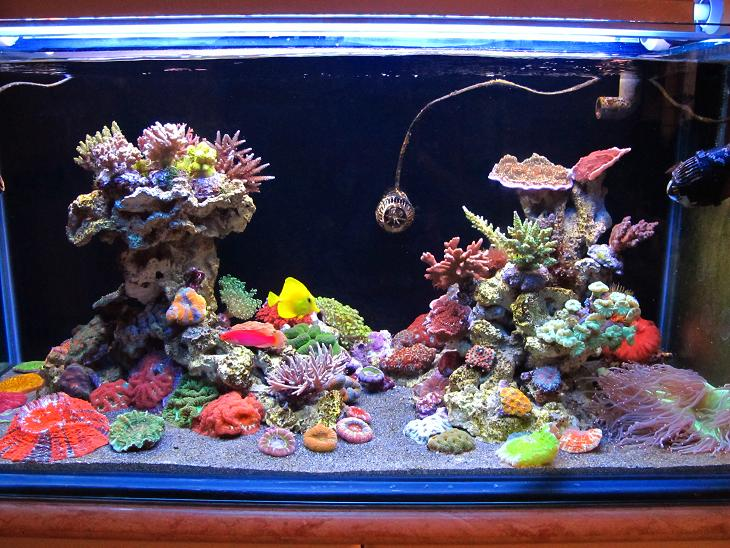 Aquarium Fish Magazine: Nano Reef Tank