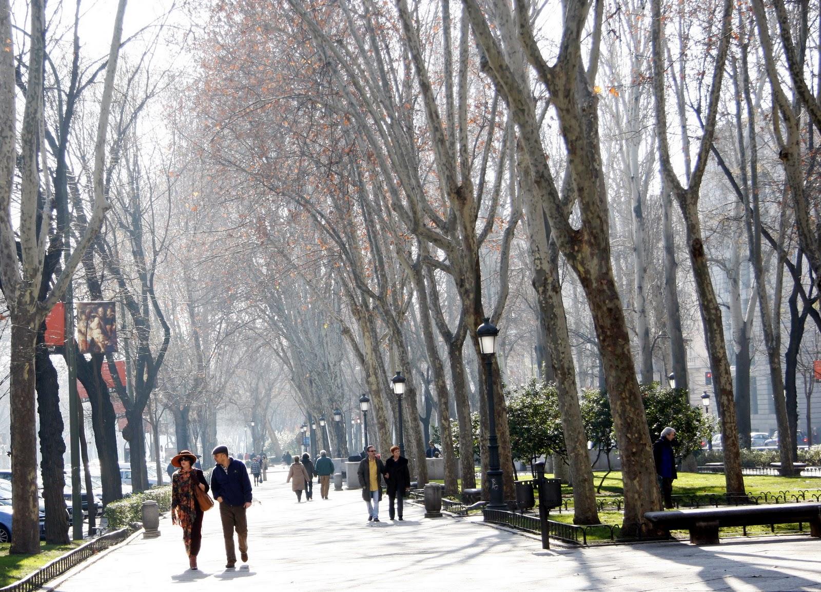 Madrid paseo del prado for Calle prado 8 madrid