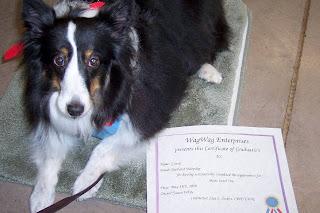 Diploma from WagWag