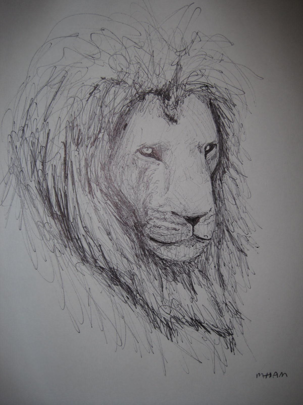 Sketches Of Lions Sketches of lions.