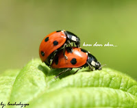my ladybird love