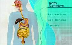 Como funciona o nosso sistema digestivo?