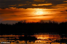 se marcharan las nubes podre ver el sol.....
