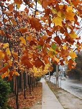 veredas amarillas... aceras mojadas.. eso es otoño..