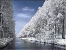 Blanco invierno gris del cielo.... soledad inerte...