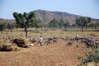 Jaipur-Delhi terrain