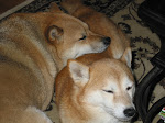The Shibas
