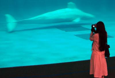 Aquas Aquarium Hamada