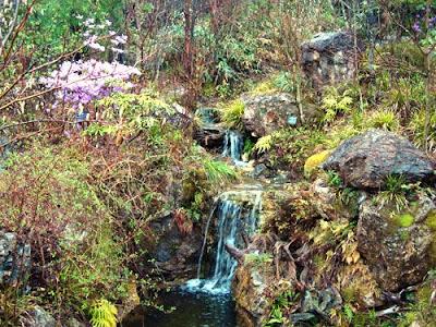 Kochi Prefectural Makino Botanical Garden