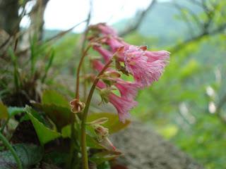 Mount Gozaisho