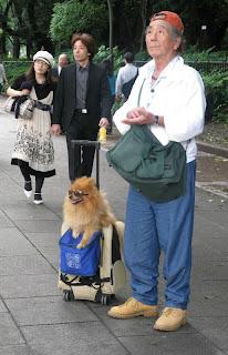 Dog wearing sunglasses in Ueno Park, Tokyo.