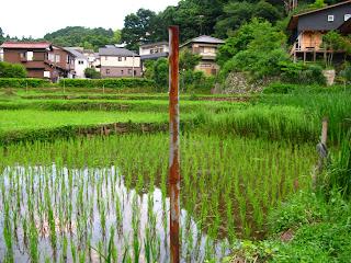 Rice field Kita-Kamakura