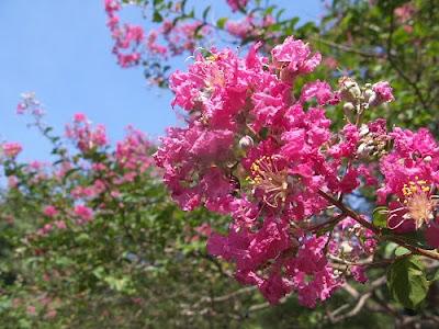 Blossom in Yoyogi Park, Tokyo, Japan.