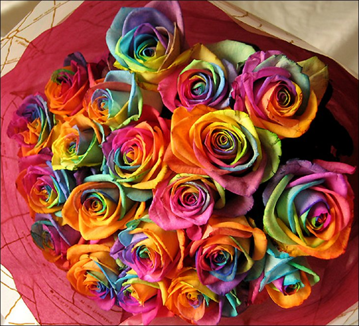Natural rainbow roses all colors in one rose for Multi colored rose petals