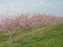 Seyfert's Orchard