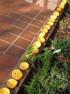 How to Make Orange Peel Firelighters