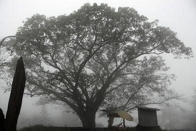 因為緯度的關係,下午容易起霧。這樣的環境最適合咖啡生長