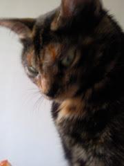 ¿Tu gato también te vigila?