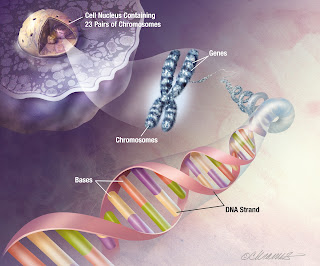 Gene Testing For Alzheimer's APOE ε4 -- Worth It?