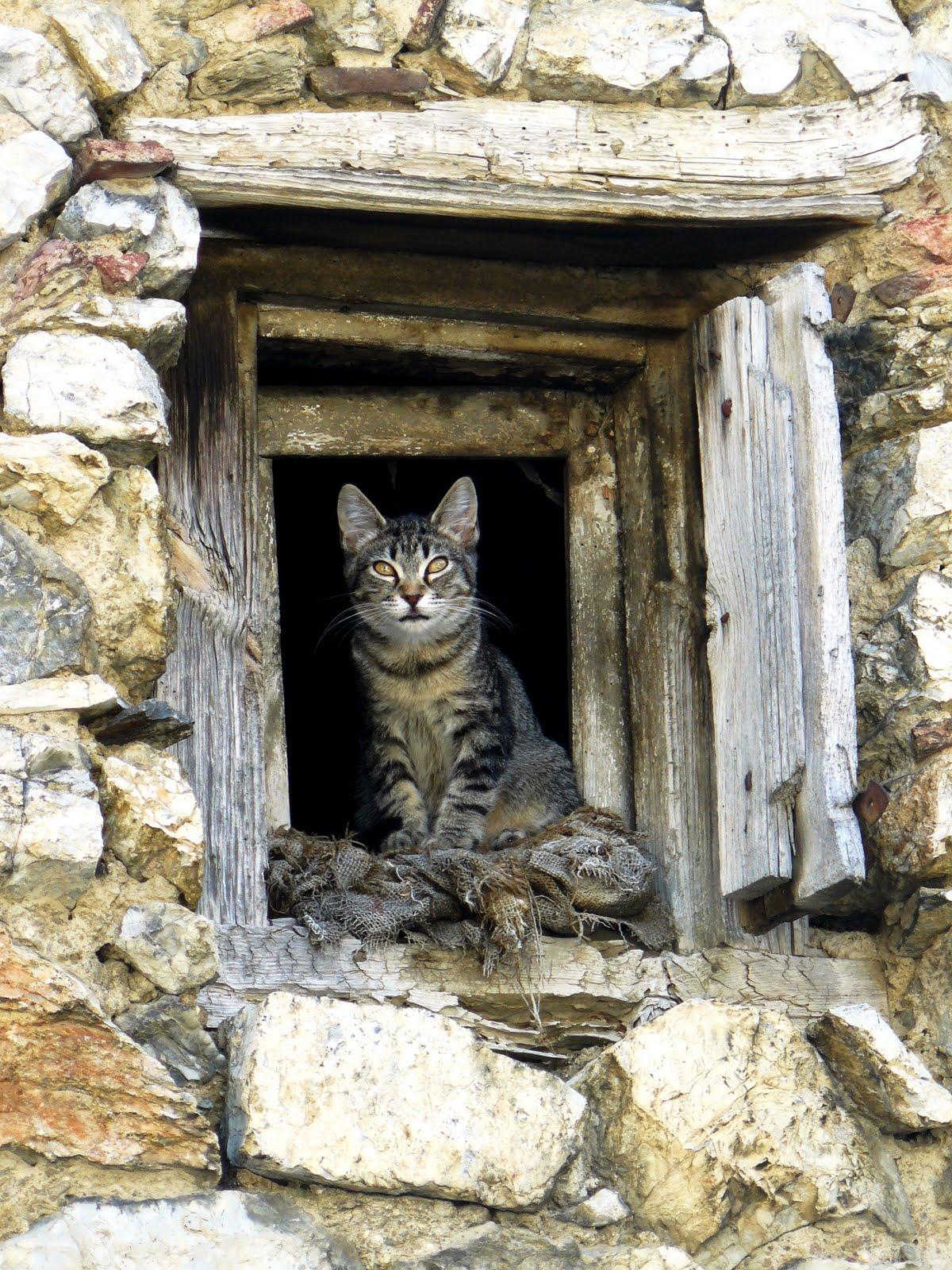 Isidre mones art gato brujo - Apartamentos dv barcelona ...