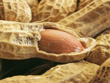 http://4.bp.blogspot.com/_UWnrkf-lAhc/TJV_KH0-6kI/AAAAAAAAB20/yL-O2WOb7-M/s1600/Kacang%2BBisa%2BTurunkan%2BKolesterol.jpg