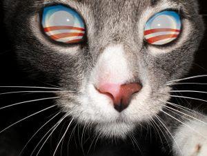 Obama cat