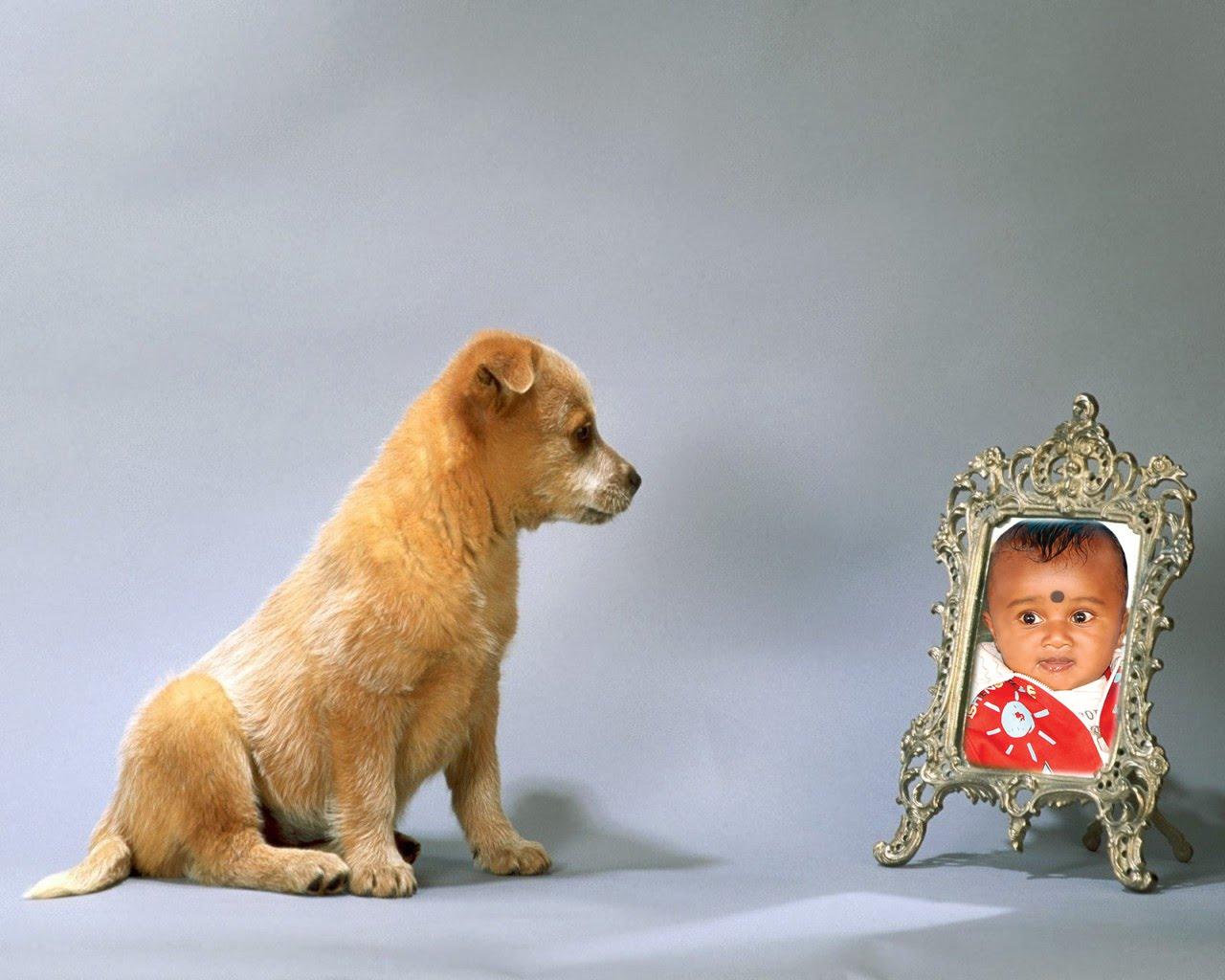 http://4.bp.blogspot.com/_UY2HhhU5rxI/S9GxBrlaqYI/AAAAAAAADbQ/uKBIGJ4ehe4/s1600/Nikhil+Naidu-Dog+Wallpaper.jpg
