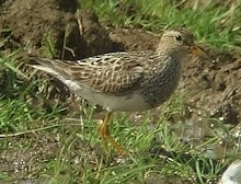 Pec sand, Low Newton, August 2010