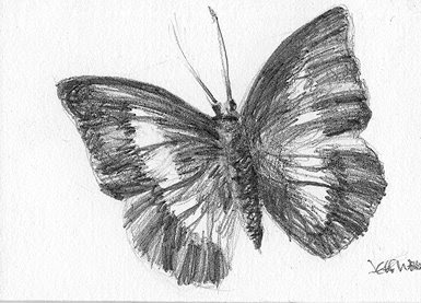 ACEO butterfly sketch