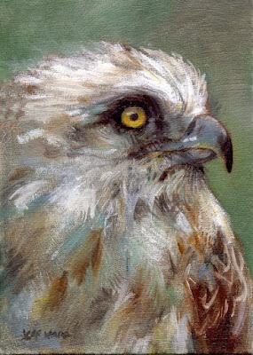 raptor bird oil painting