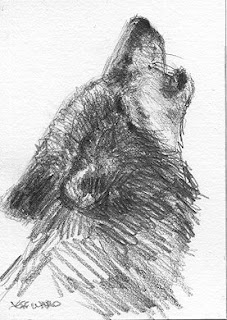 ACEO howling wolf sketch