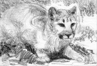 cougar sketch