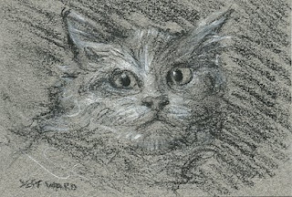 white cat aceo sketch