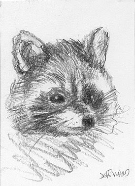 raccoon sketch aceo