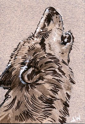 howling wolf line and wash drawing
