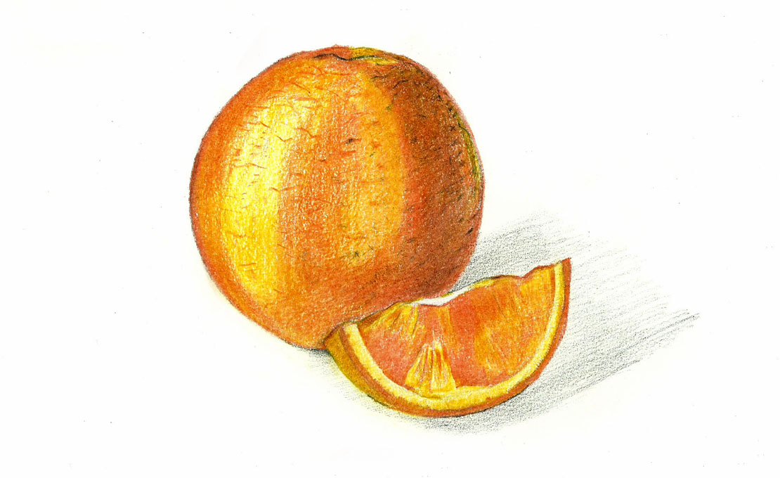 Orange Fruit Pencil Drawing