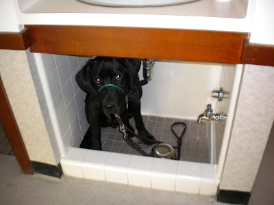 Dagan squished into the dog sink under the people sink in Sara's dorm room