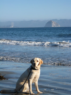 Poppy sitting on the beach with Morro Rock in the background