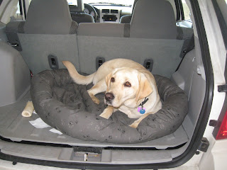 Poppy looking drowsy in her dog bed in the back of the car