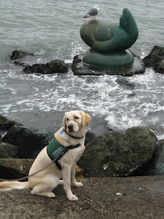 Poppy sitting with the water at her back and seagull sitting on a seal statue