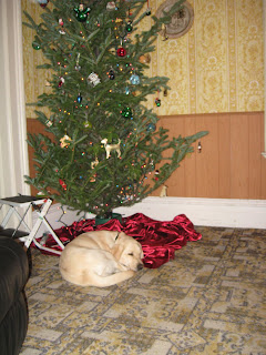 Poppy curled up asleep under the tree