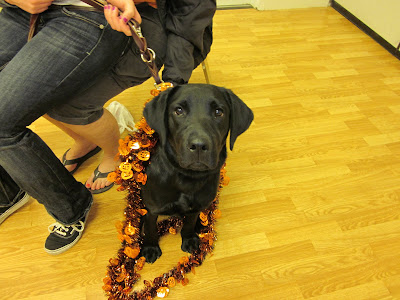 Hestia, FBL, wrapped up in a Halloween garland