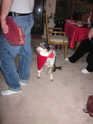 Lupe the cattle dog with the Santa hat under her chin, like a beard