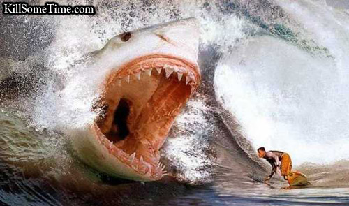 Images Best Shark Attack