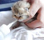 Cara merawat anak kucing dan tipsnya